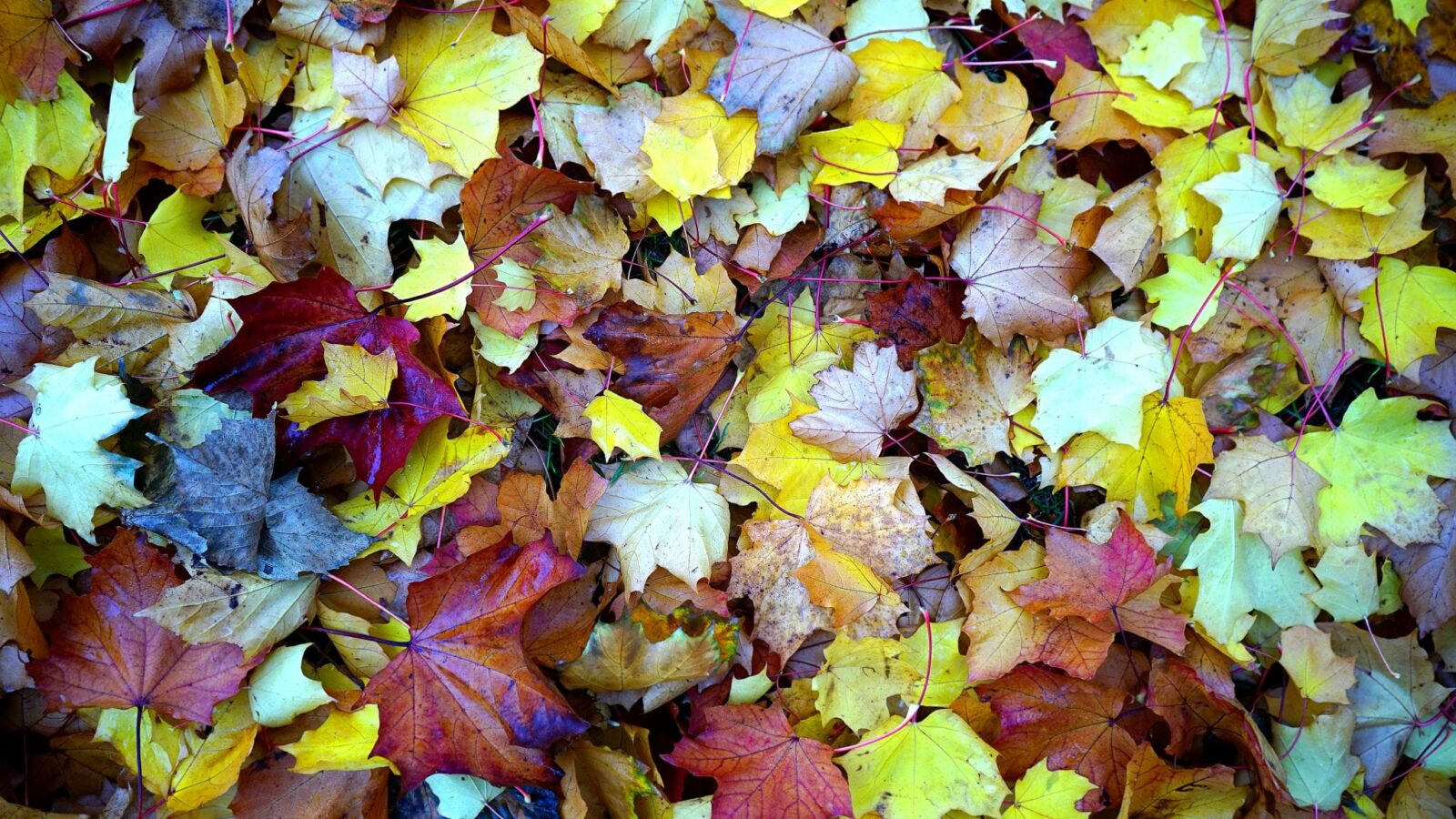 Bladeren herfst