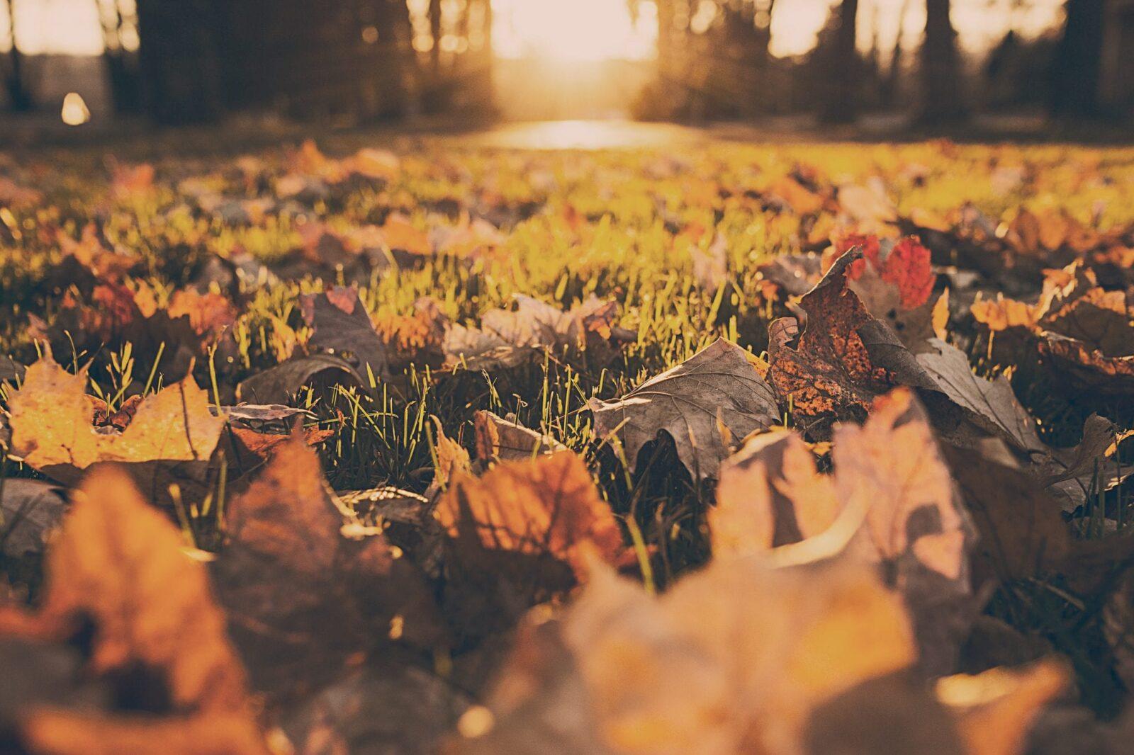 Grasveld met herfstbladeren