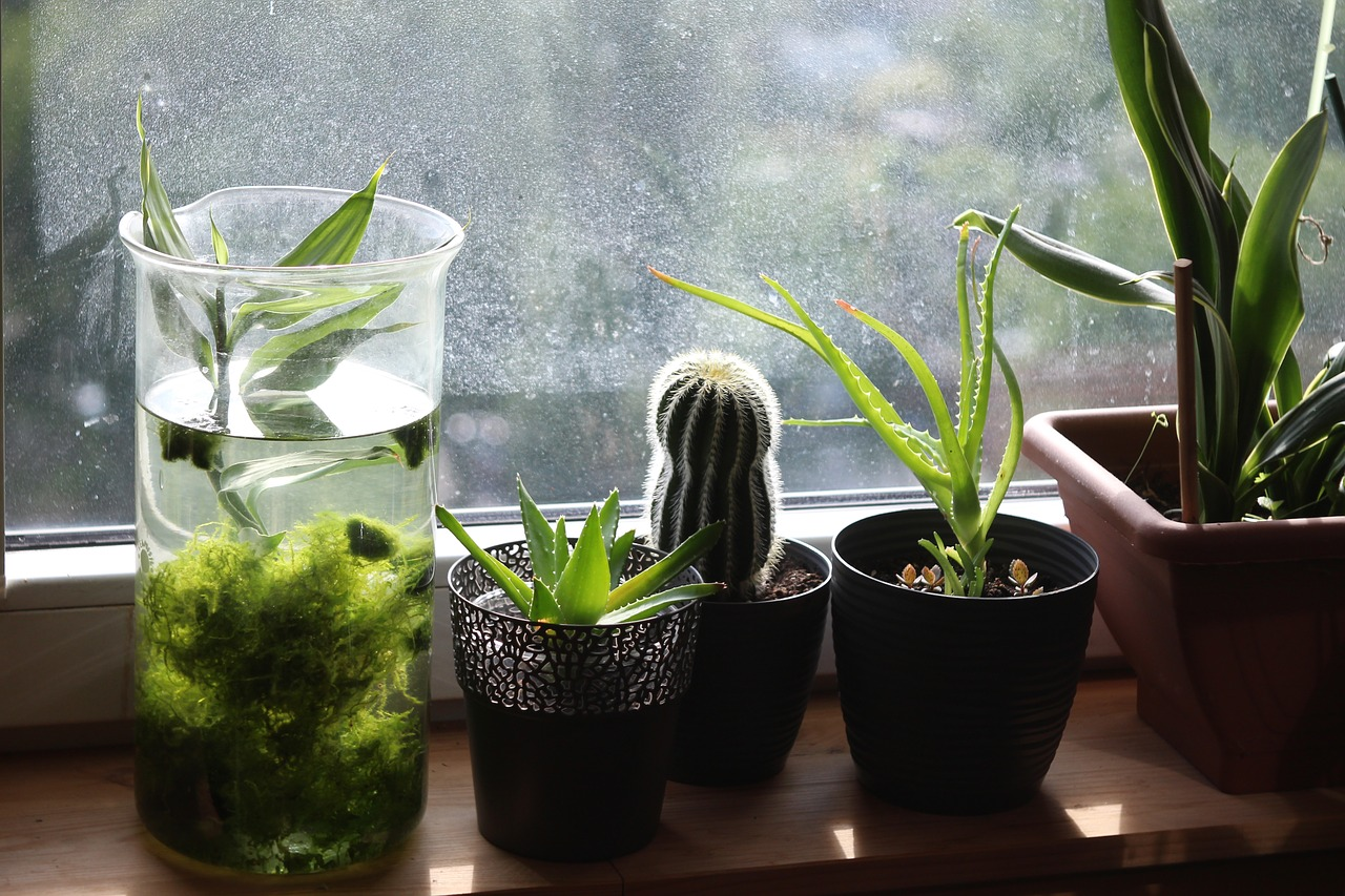 Planten en cactus in de vensterbank
