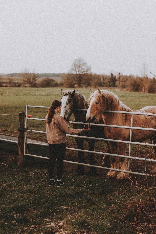 meisje paarden voeren